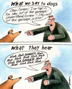 what dogs hear